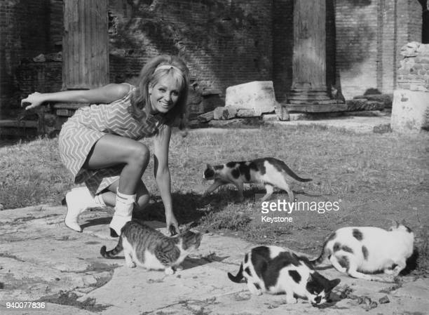 Italian actress Rossella Como feeds the cats at the Largo di Torre Argentina in Rome Italy September 1966