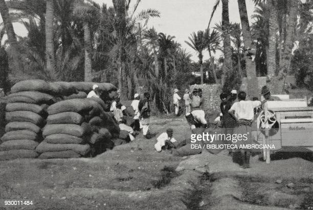 Italian agricultural machinery in operation in Derna Libya ItalianTurkish war photograph by G Sartone from L'Illustrazione Italiana Year XXXIX No 26...