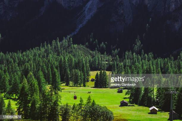 italian alps. aerial view of pine tree forest surrounded by mountains - peccio foto e immagini stock