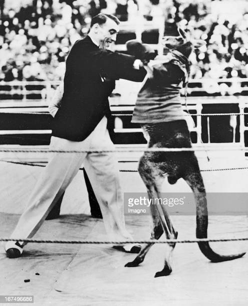 Italian boxer and 1933/34 world heavyweight champion Primo Carnera in an exhibition match against a kangaroo in New York August 1933 Photograph Der...