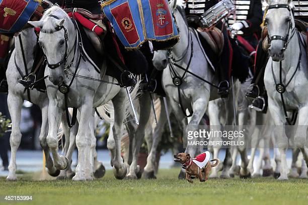 Italian Carabinieri dog mascotte runs as Italian Carabinieri knights perform the traditional 'Carousel' during the military parade to mark the 200th...