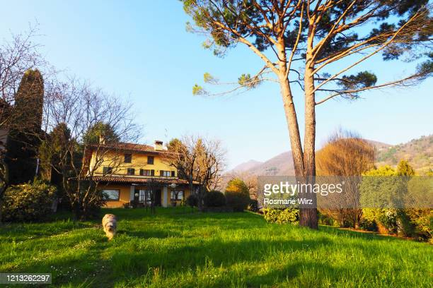 italian country house low angle view, huge pine tree - italian culture stock pictures, royalty-free photos & images