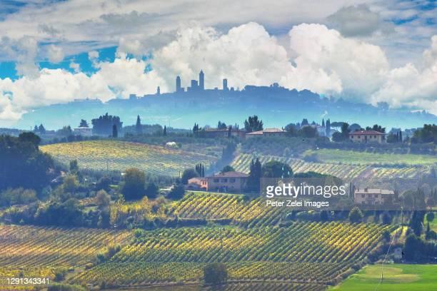 italian countryside with vineyards and olive tree plantations - サンジミニャーノ ストックフォトと画像