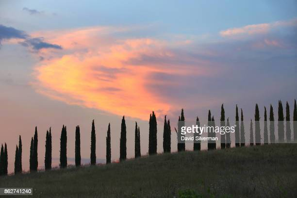 Italian Cypress trees an iconic symbol of the Tuscan countryside are seen at dusk on July 23 2015 near the hilltop town of Montalcino in the region...