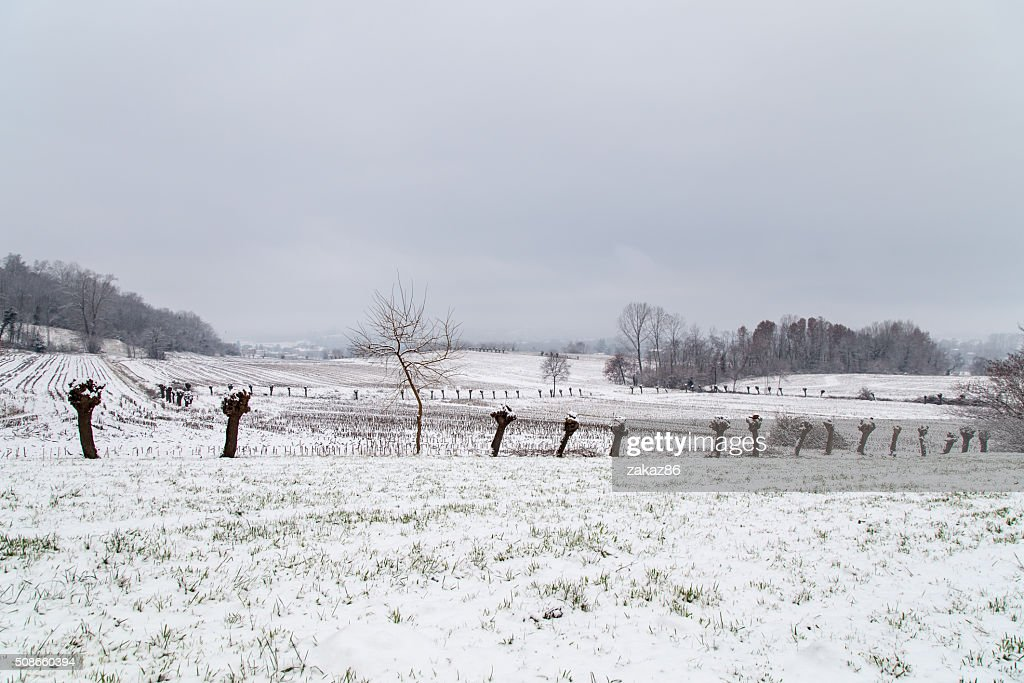 italian fields covered by snow : Stock Photo
