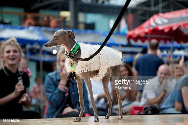 Italian Greyhound at the Paw Pageant dog show at Spitalfields Market London Local people enter their dogs into the Shoreditch Unbound Festival Dog...