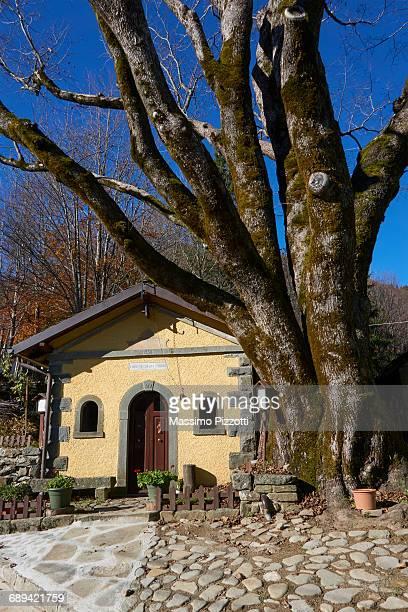 italian oldest mountain elm tree with church - massimo pizzotti foto e immagini stock