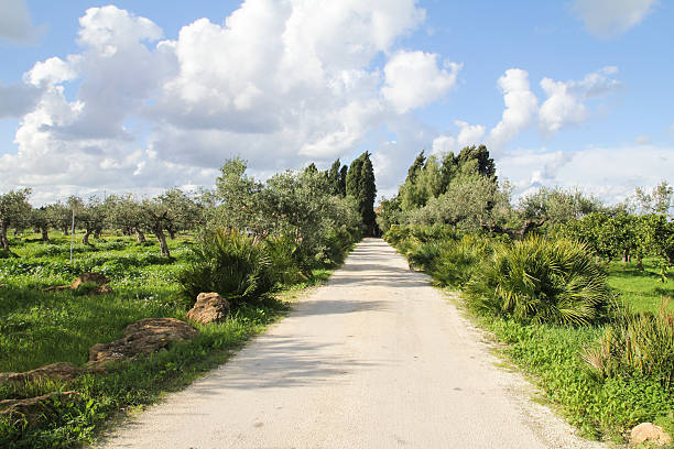 Italian Road To Olive Orchard Wall Art
