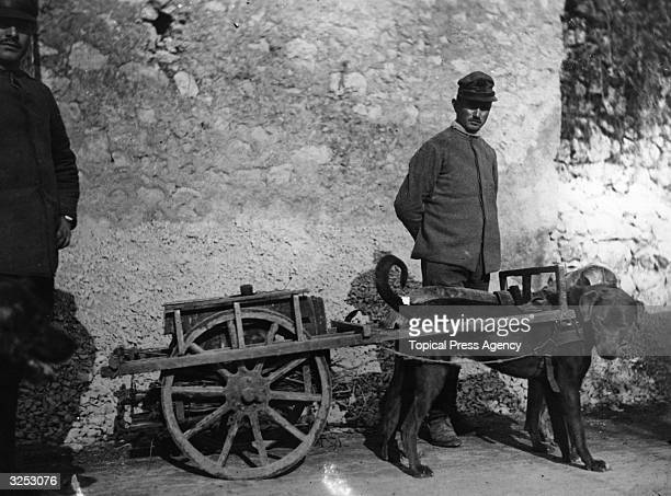Italian soldiers with their dog team during World War I