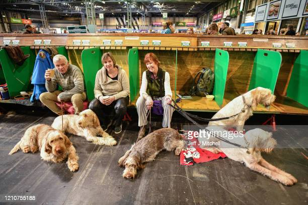 Italian Spinone dogs wait to be shown on day 2 of the Cruft's dog show at the NEC Arena on March 6, 2020 in Birmingham, England. The annual four-day...
