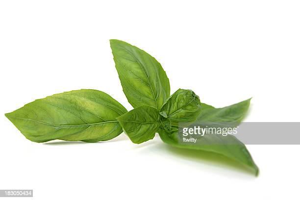 Italienische süßes Basilikum, isoliert auf weiss