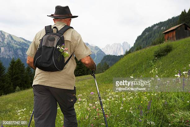 Italy, Alto Adige, Dolomites, man hiking through Fassa Valley