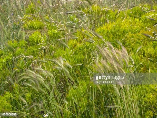 italy, apulia, province of brindisi, cisternino, pomona gardens, wild grass - cisternino stock photos and pictures