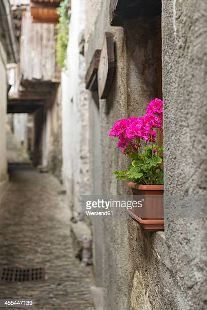 Italy, Flower pot with geraniums in granite alley