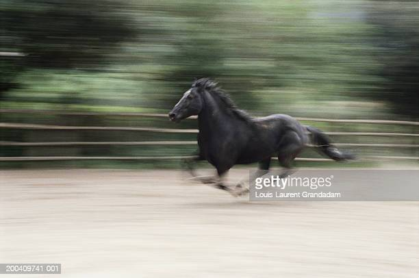 Italy, Latium, Maremma horse galloping (blurred motion)