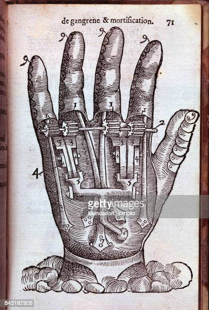 Italy Lombardy Milan Braidense National Library Whole artwork view Cross section of a hand made of mechanisms instead of nerves and muscles Figure...