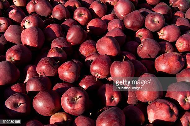 Red Delicious Apple Stock Photos And Pictures