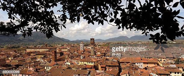 Italy Lucca Panorama of the old town from the Guinigi Tower