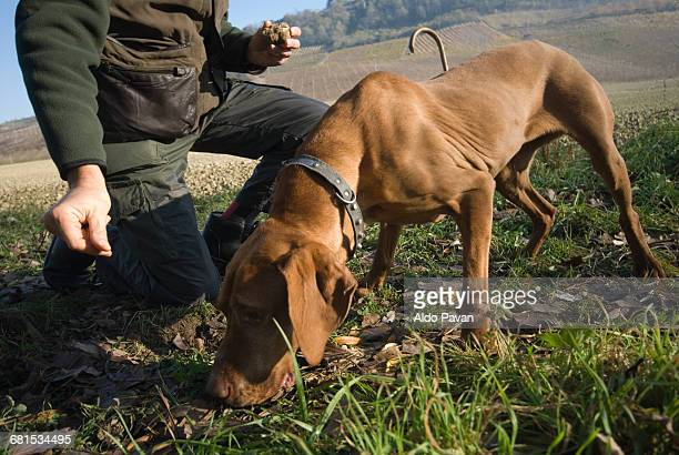 Italy, Piedmont, Canelli, looking for truffles