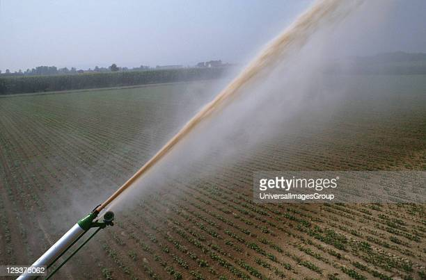 Italy Po Delta Saluzzo Vicinity Cuneo Modern Irrigation Systems Help Farmers In The Po Valley To Produce Some Of The Worlds Highest Yields Per...