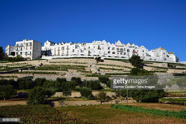 italy, puglia, locorotondo, terraced vineyards and town on hill - locorotondo stock photos and pictures