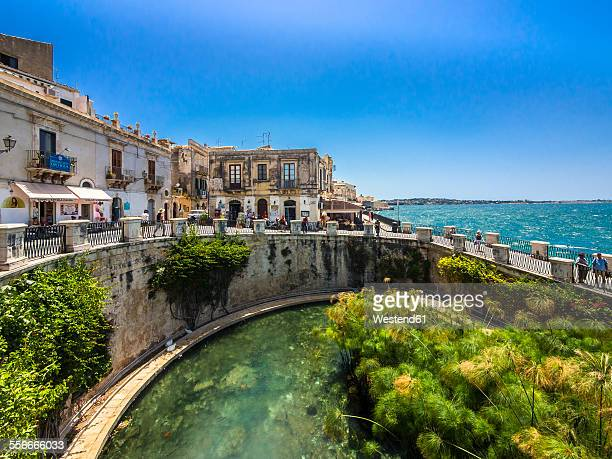 italy, sicily, siracusa, arethusa spring - sicily stock pictures, royalty-free photos & images