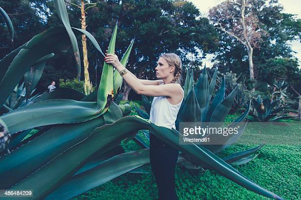 Italy, Sicily, young woman freeing a giantic  Agave americana in the Botanical Garden of Palermo