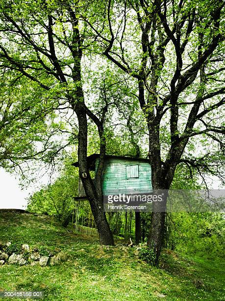 Italy, Sienna, treehouse