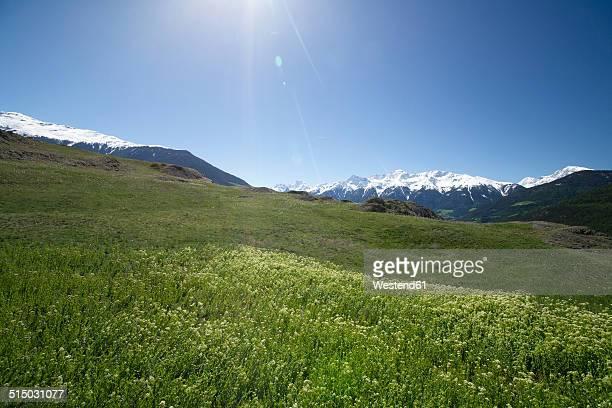 Italy, South Tyrol, Mals, Tartscher Buehel, View to Ortler Alps