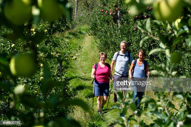 italy, south tyrol, vinschgau, naturns, apple groove, hikers - zuid europese etniciteit stockfoto's en -beelden