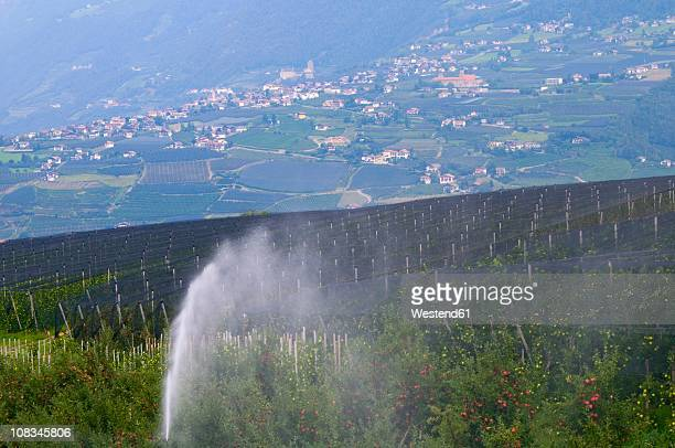 Italy, South Tyrol, Vinschgau, View of apple field with village