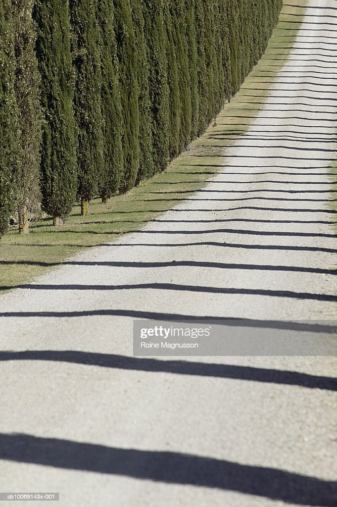 Italy, Toscana, San Quirico d'Orcia, country road lined with cypress trees : Stockfoto