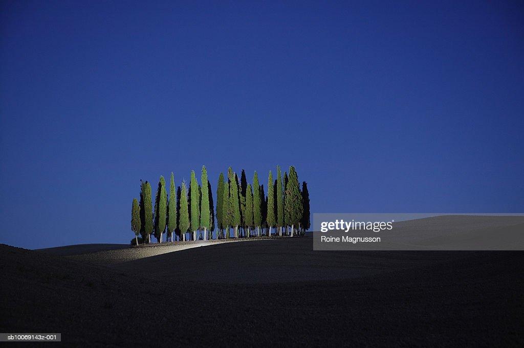 Italy, Toscana, San Quirico d'Orcia, cypress trees : Stockfoto