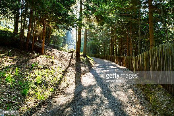 Italy Trentino Alto Adige path in the forest