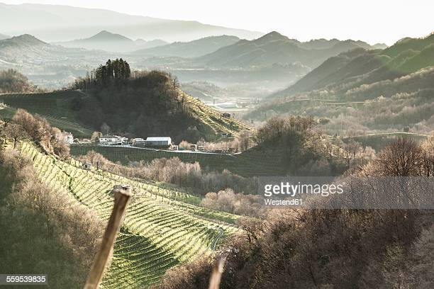 Italy, Treviso, view from Strada del Prosecco to hills with grapevines in the morning mist