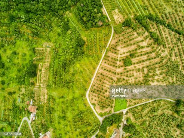 Italy, Tuscany, Aerial view of Monsummano Terme