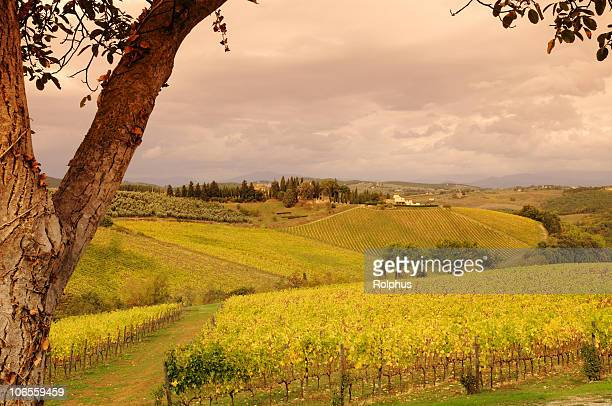 Italien, Toskana und Weinberge Herbst