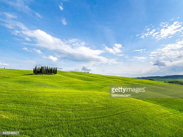italy, tuscany, cypress trees on hill - hill stock pictures, royalty-free photos & images
