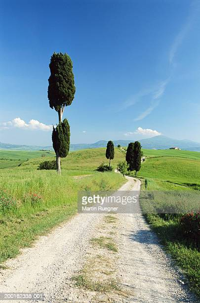 italy, tuscany, dirt road and cypress trees - italian cypress stock pictures, royalty-free photos & images