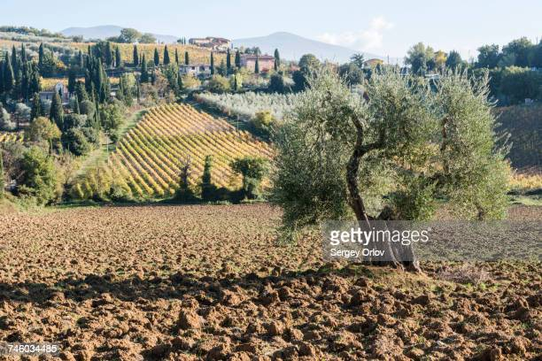 Italy, Tuscany, Montalcino, Hills and vineyards with Abbey of SantAntimo in distance