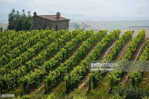 italy. tuscany. montalcino - モンタルチーノ ストックフォトと画像