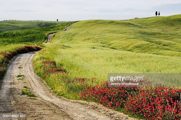 Italy, Tuscany, San Quirico d'Orcia, country road