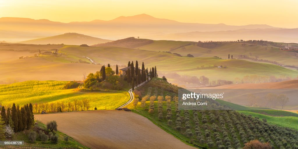 Italy, Tuscany, San Quirico D'Orcia, Podere Belvedere, Green hills, olive gardens and small vineyard under rays of morning sun : ストックフォト
