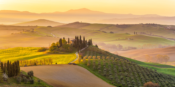 Italy, Tuscany, San Quirico D'Orcia, Podere Belvedere, Green hills, olive gardens and small vineyard under rays of morning sun - gettyimageskorea