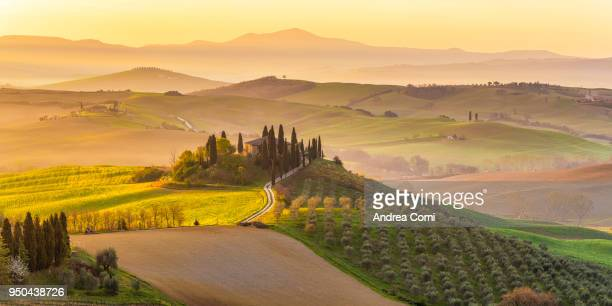 italy, tuscany, san quirico d'orcia, podere belvedere, green hills, olive gardens and small vineyard under rays of morning sun - siena italy stock photos and pictures