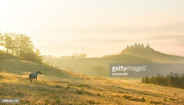 italy, tuscany, san quirico d'orcia, view to rolling landscape in the morning mist - fauna selvatica foto e immagini stock
