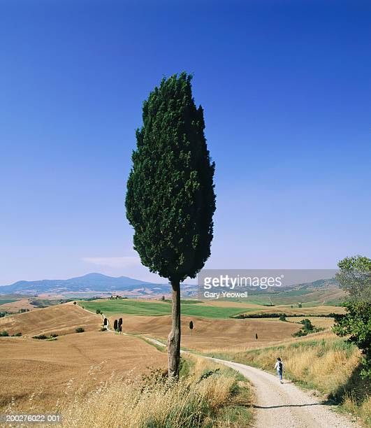 italy, tuscany, siena, val d'orcia, woman walking by cypress tree - yeowell stock photos and pictures