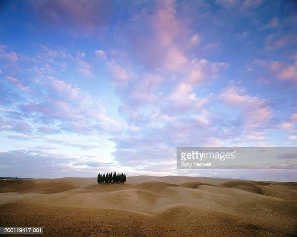 italy, tuscany, val d' orcia, row of cypress trees on hillside, sunset - yeowell stock photos and pictures