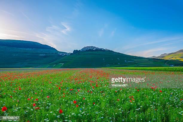 italy, view of parco nazionale dei monti sibillini, blooming on piano grande of castelluccio of norcia - カステッルッチョ ストックフォトと画像
