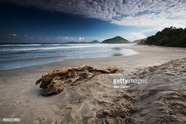 itamambuca beach in ubatuba, sao paulo state. - alex saberi bildbanksfoton och bilder